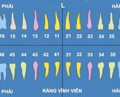 Các răng trên cung hàm của bạn đều được đặt tên theo thứ tự
